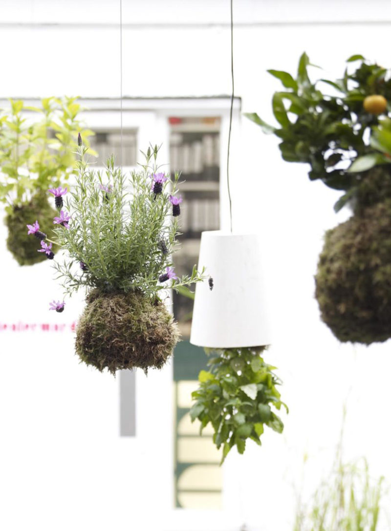 The Hanging Garden of CDW